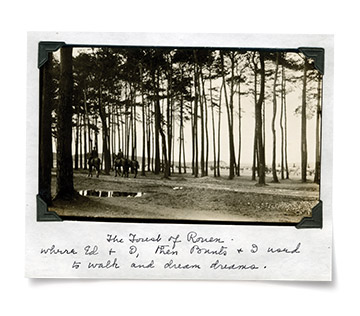 Polaroid of a forest