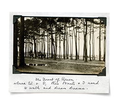 Polaroid of forest